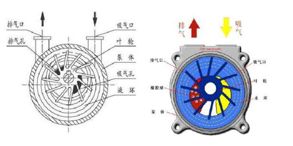水环真空泵构成